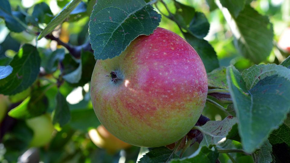 apple-1609693_960_720