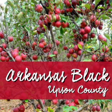 arkansas black upson