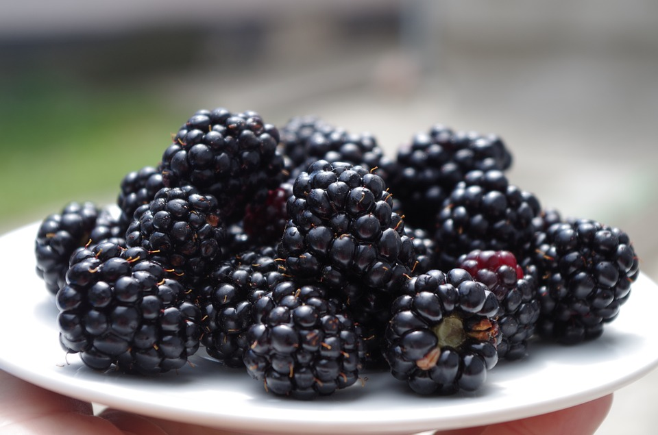 blackberries-1045728_960_720