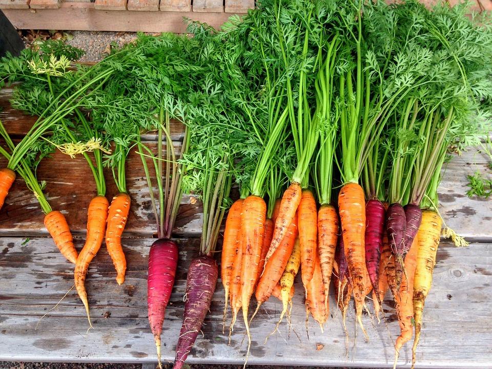 carrot-2743498_960_720