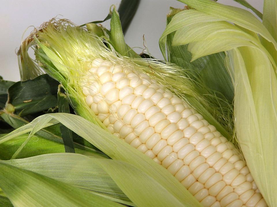 corn-1039801_960_720
