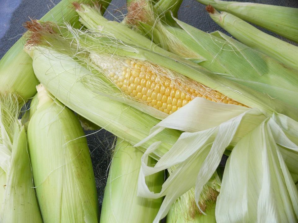 corn-776559_960_720