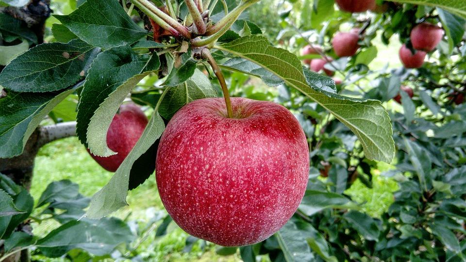 fruit-2740499_960_720