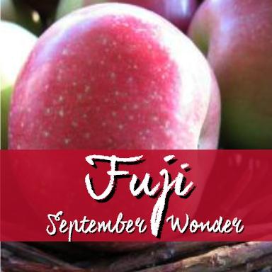 fuji september wonder