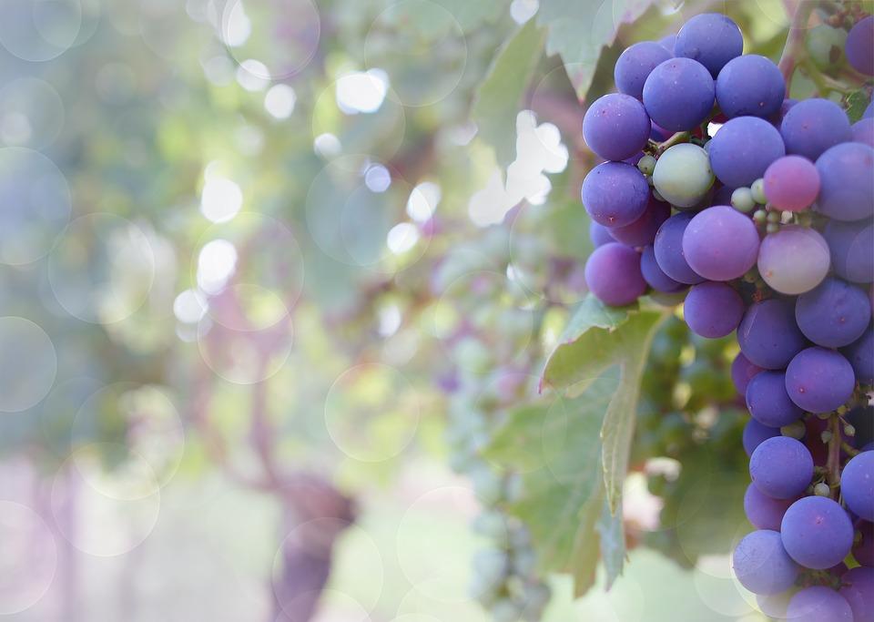 grapes-2180685_960_720
