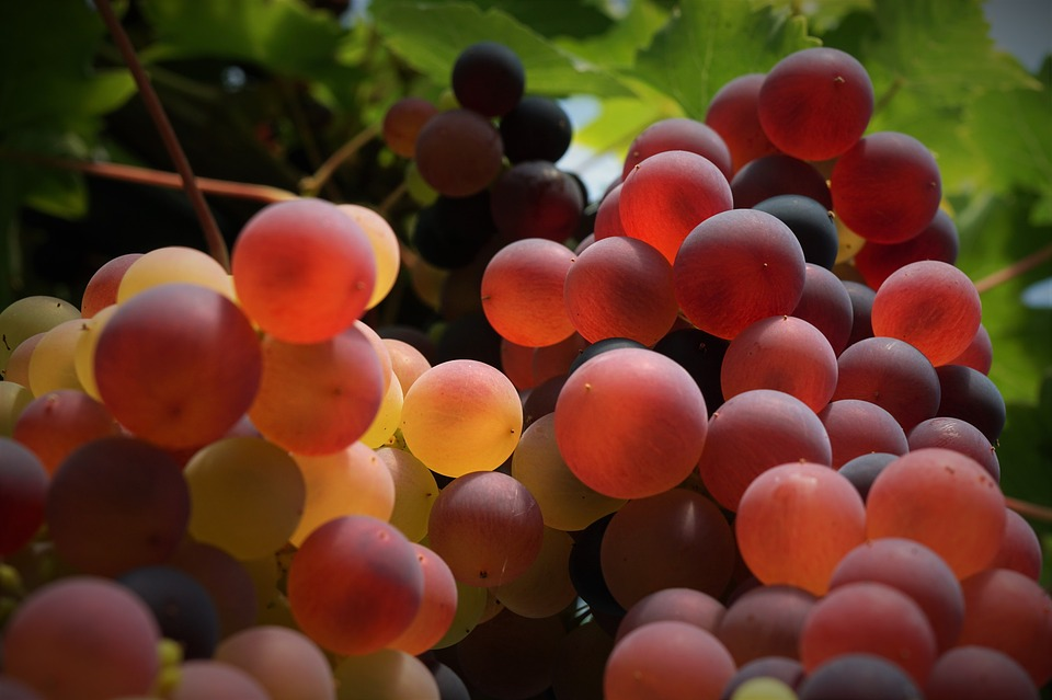 grapes-2597669_960_720