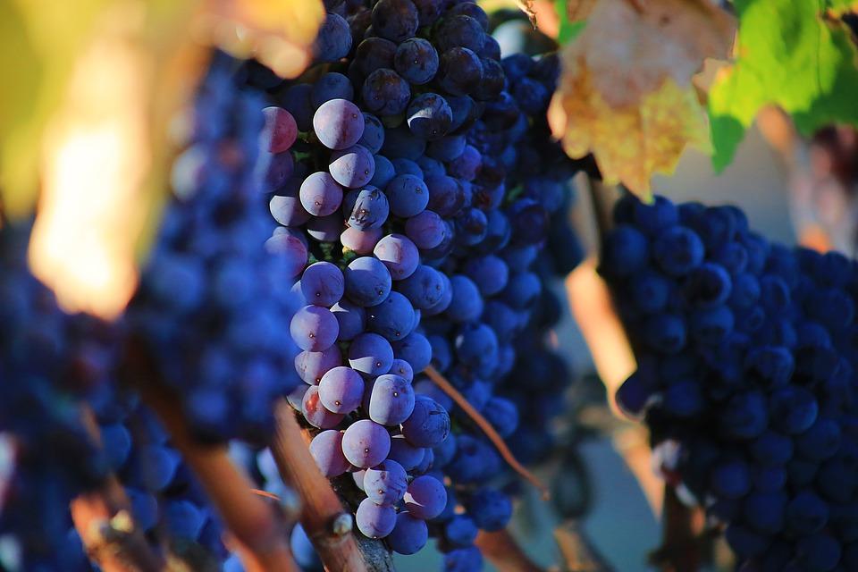 grapes-2749369_960_720