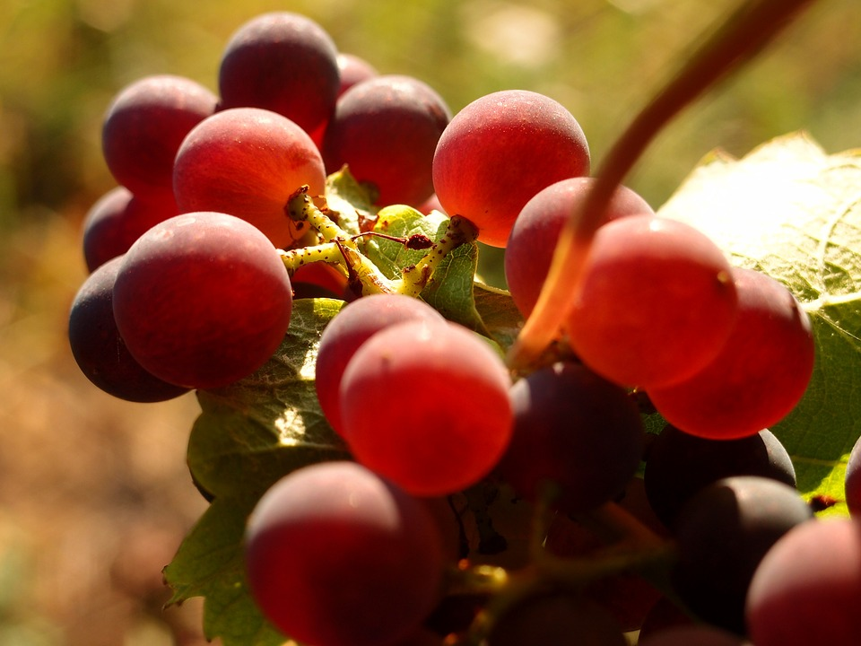 grapes-898175_960_720