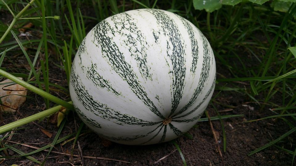green-pumpkin-2648781_960_720