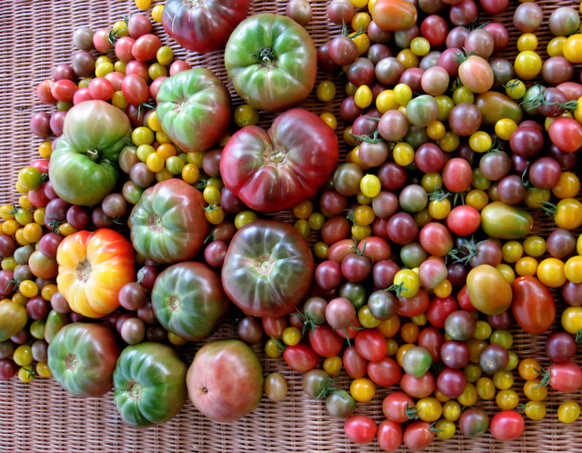 July 6, 2012 Heirloom Tomatoes