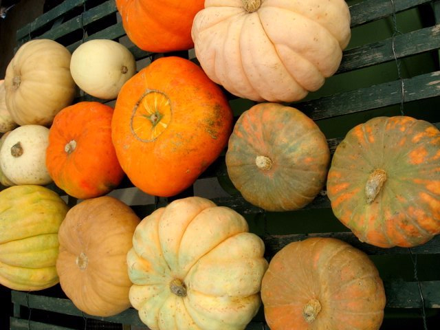 heirloom pumpkins 2