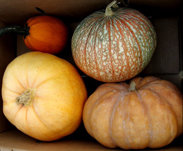 heirloom-pumpkins.jpg