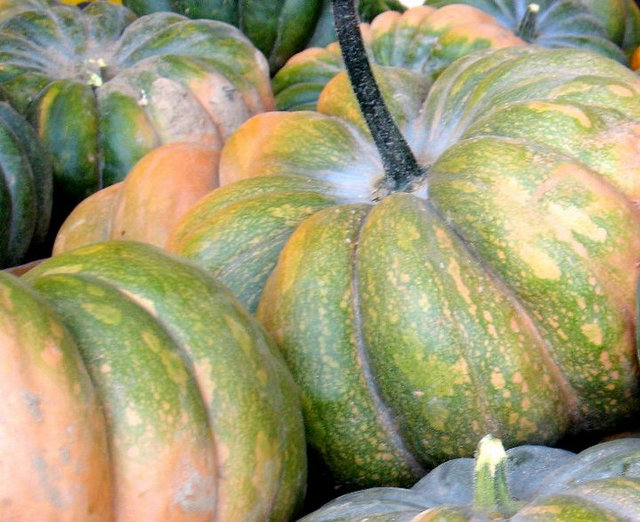 heirloom pumpkins2
