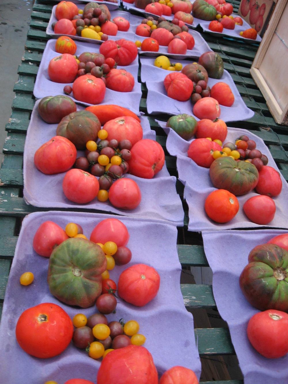 heirloom tomatoes farmer steve