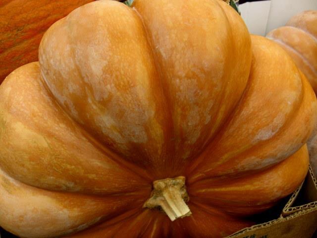hierloom pumpkin