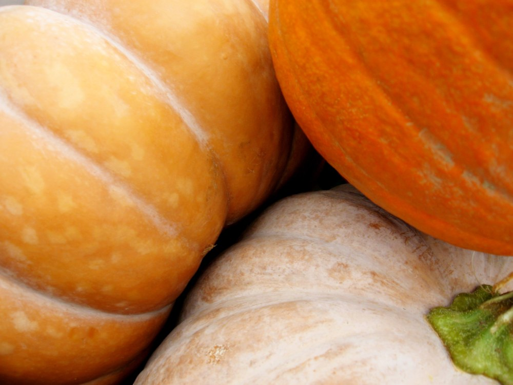 hierloom pumpkins shares