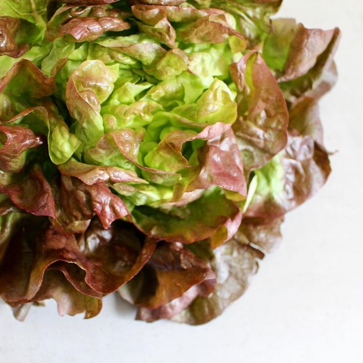 lettuce-2086782_960_720