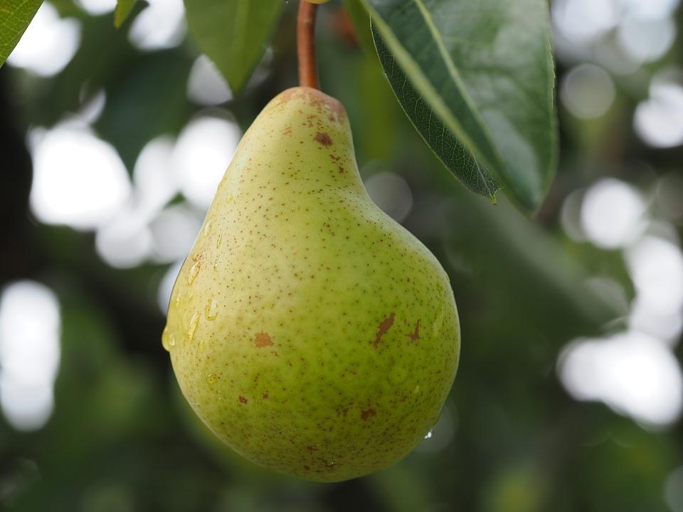 pear-2711601_960_720
