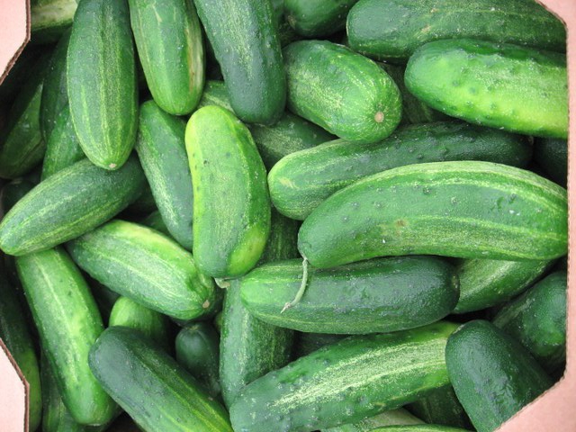 pickling cucumbers bulk share