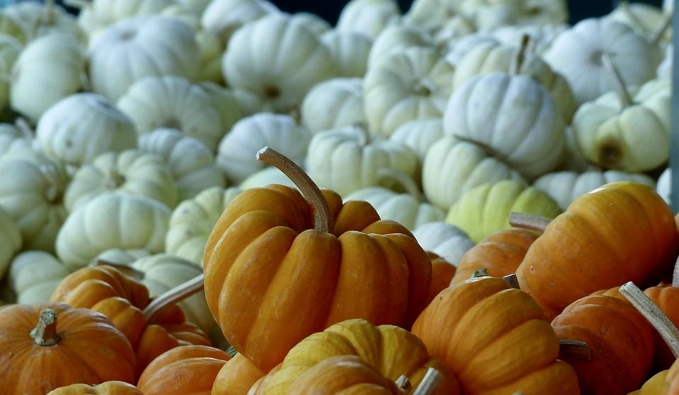pumpkins-1080169_960_720