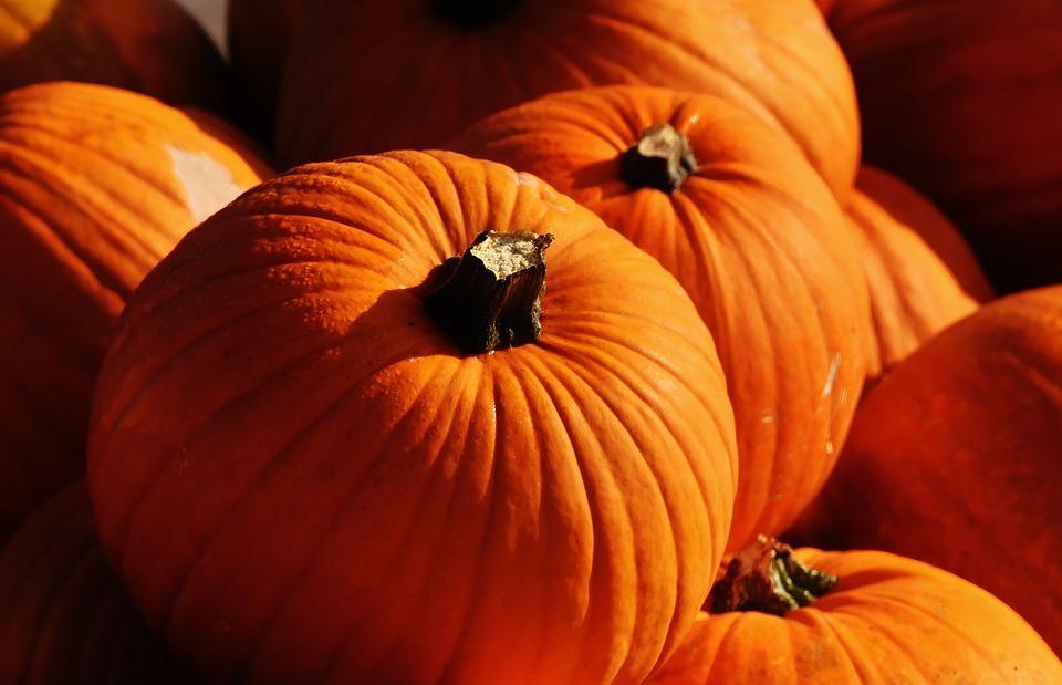 pumpkins-1659941_960_720