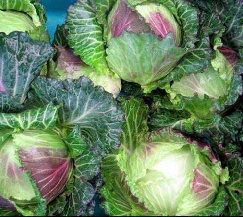 randalls cabbage