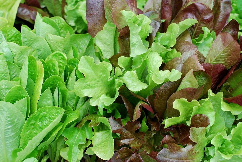 salad-2357833_960_720