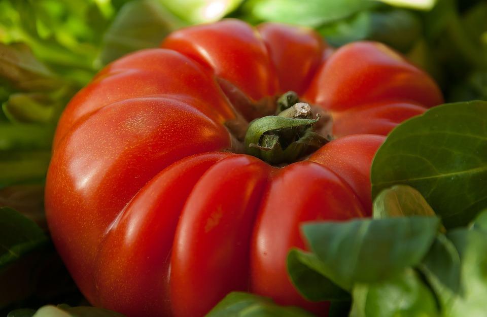 tomato-1331862_960_720-001