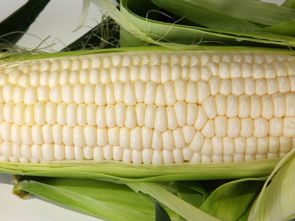 corn-1039813_960_720