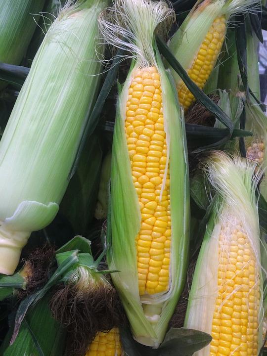 corn-1615021_960_720
