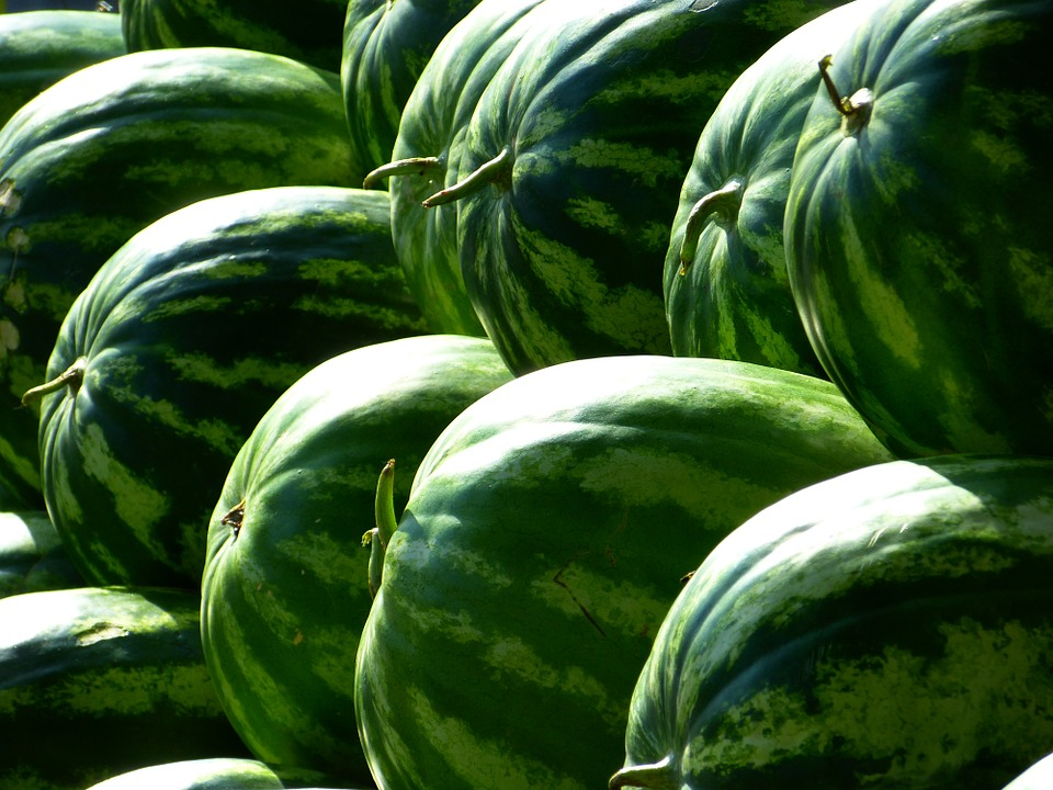 melons-197025_960_720