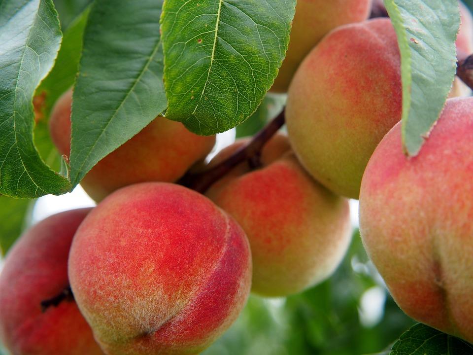 peach-2632182_960_720