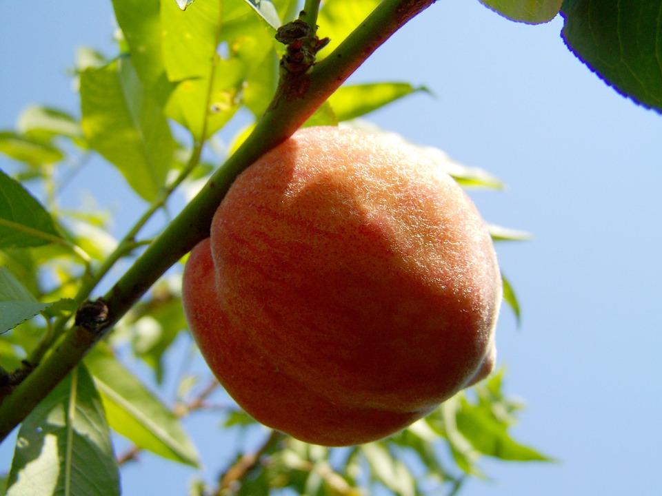 peach-2657599_960_720