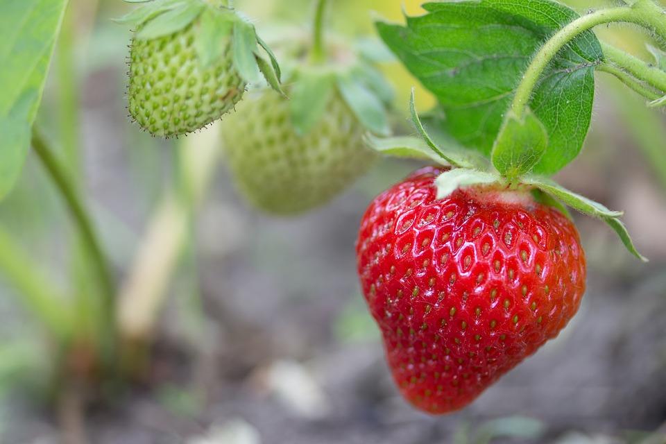 strawberry-2343487_960_720