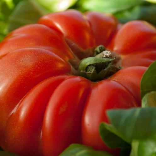 tomato-1331862_960_720 (2)