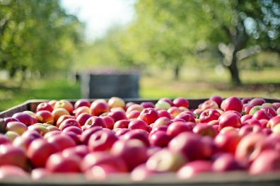apples-1004886_960_720 (2)