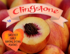 clingstone