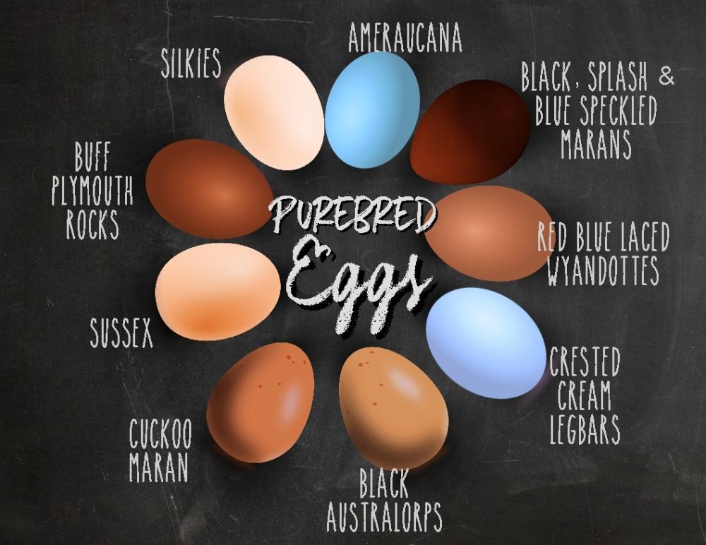 egg ID