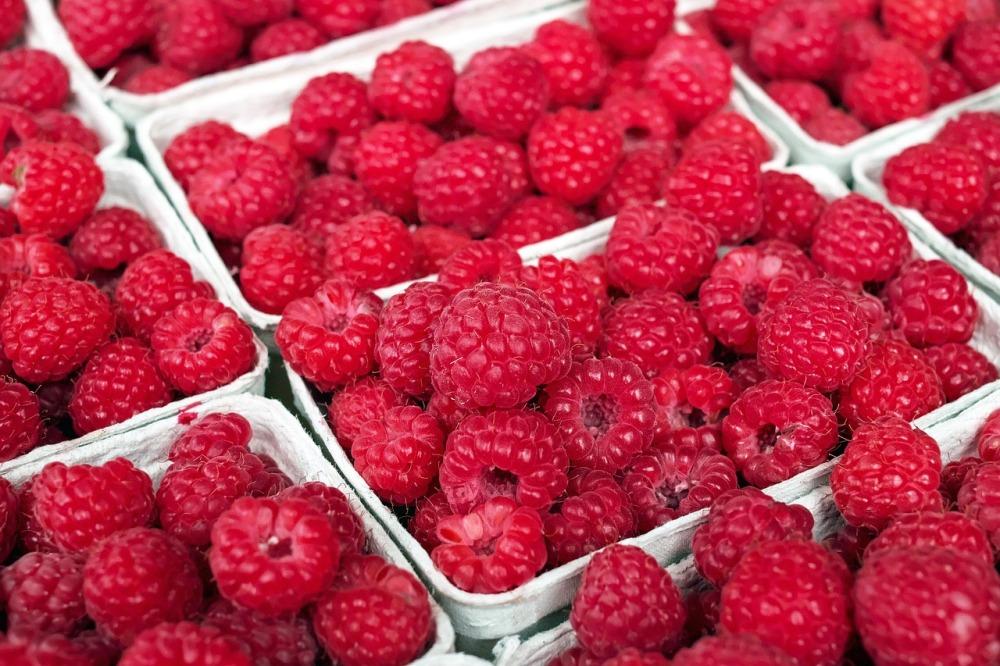 tmp_2045-raspberry-1465988_1280-1902338348