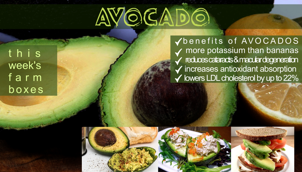 avocado benefits png