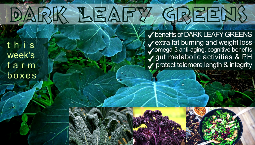 DARK LEAFY GREENS BENEFITS