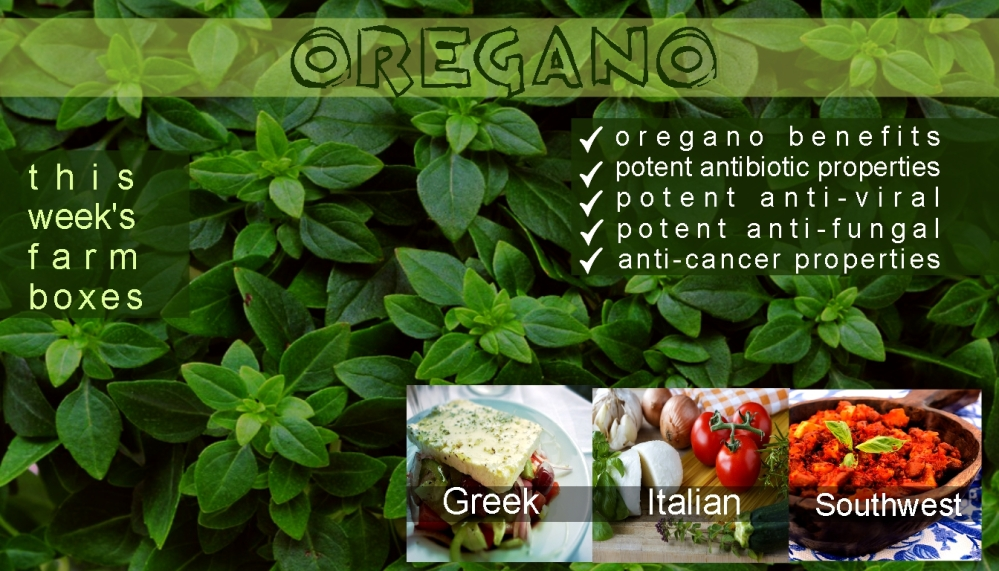 oregano benefits template