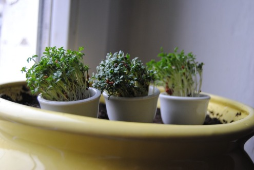 plant-3189041_960_720