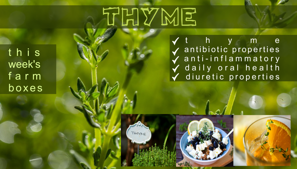 thyme benefits png
