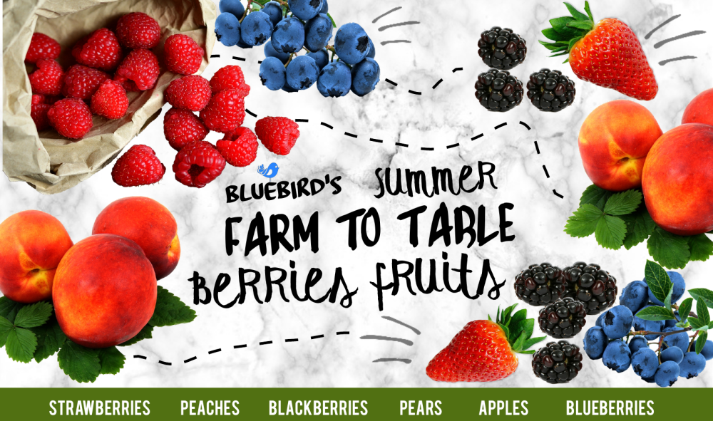 BERRIES FRUITS BANNER PNG