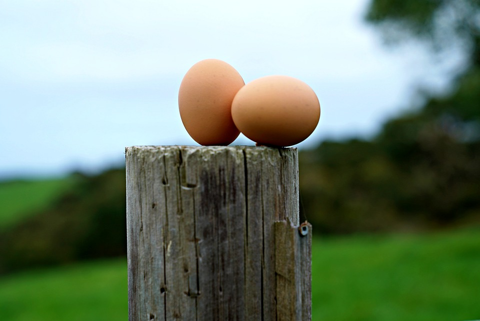 eggs-2831698_960_720