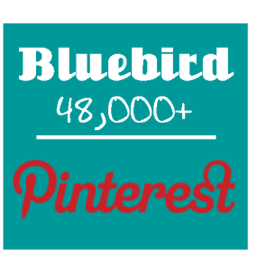 bluebird on pinterest