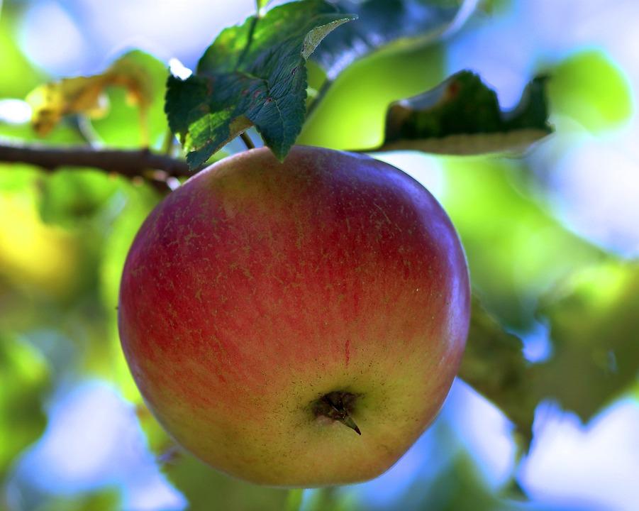 apple-1632016_960_720