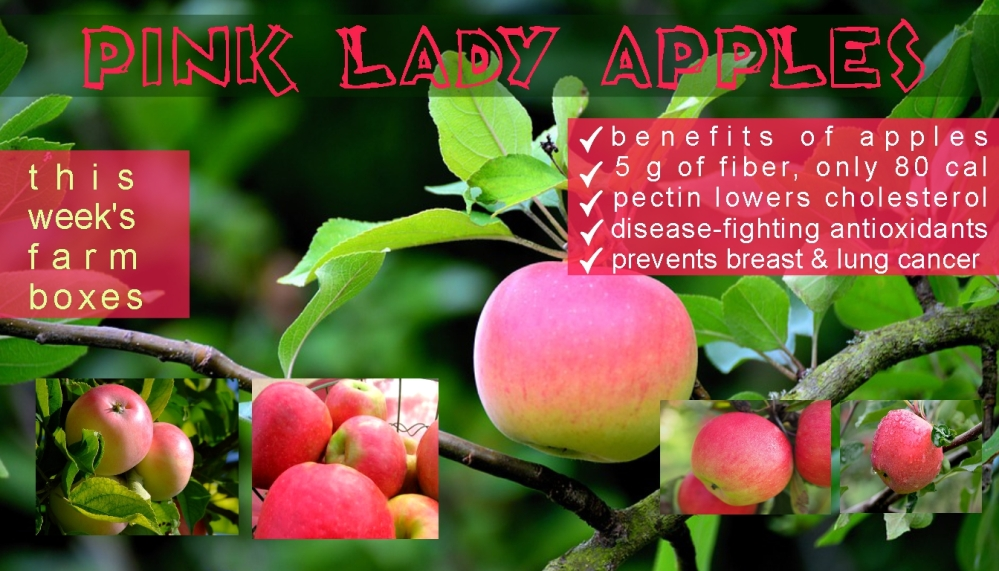 pink lady benefits